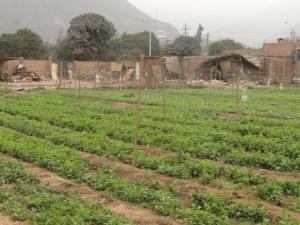Huachipa, just outside of Lima