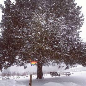 winter_ashton