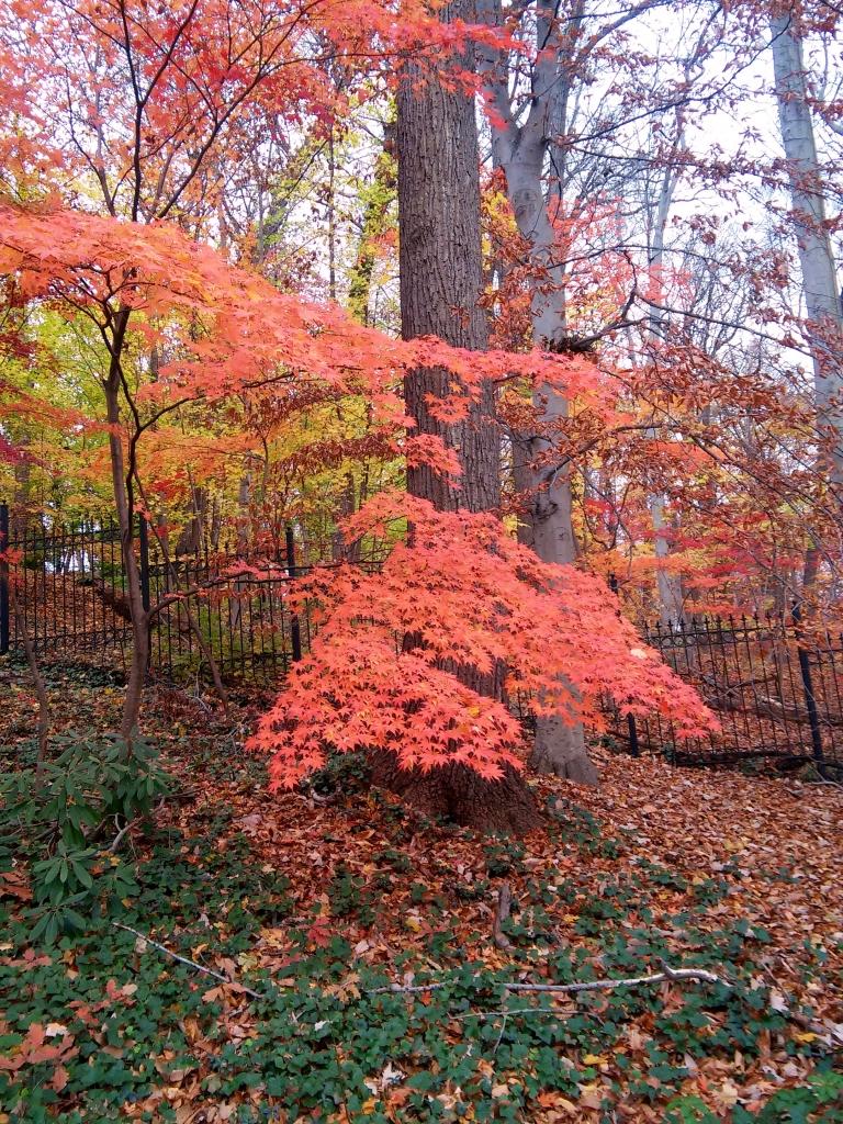 WIS tree