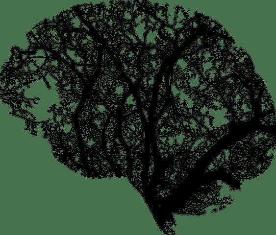brain-2146817__480.png